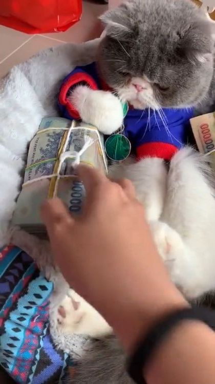 My cat likes money
