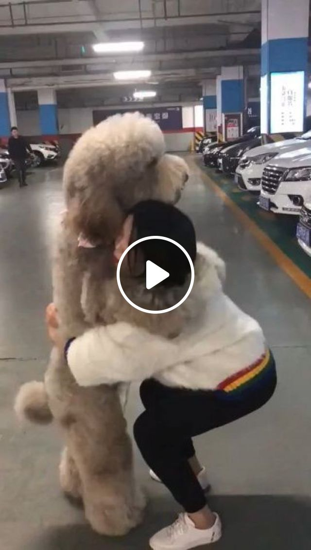 I'm Tired Of My Feet, Don't Go - Video & GIFs | animals & pets, giant dogs, parking lots, luxury cars