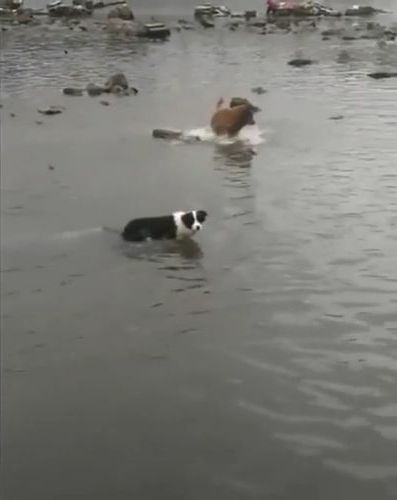 Smart dogs catch fish at  beach - Funny Videos - funnylax.com - animals & pets,smart dogs,dog breeds,fish catches,beaches