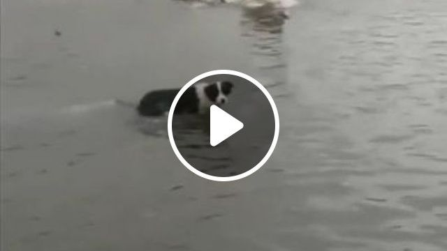 Smart Dogs Catch Fish At Beach - Video & GIFs | animals & pets, smart dogs, dog breeds, fish catches, beaches