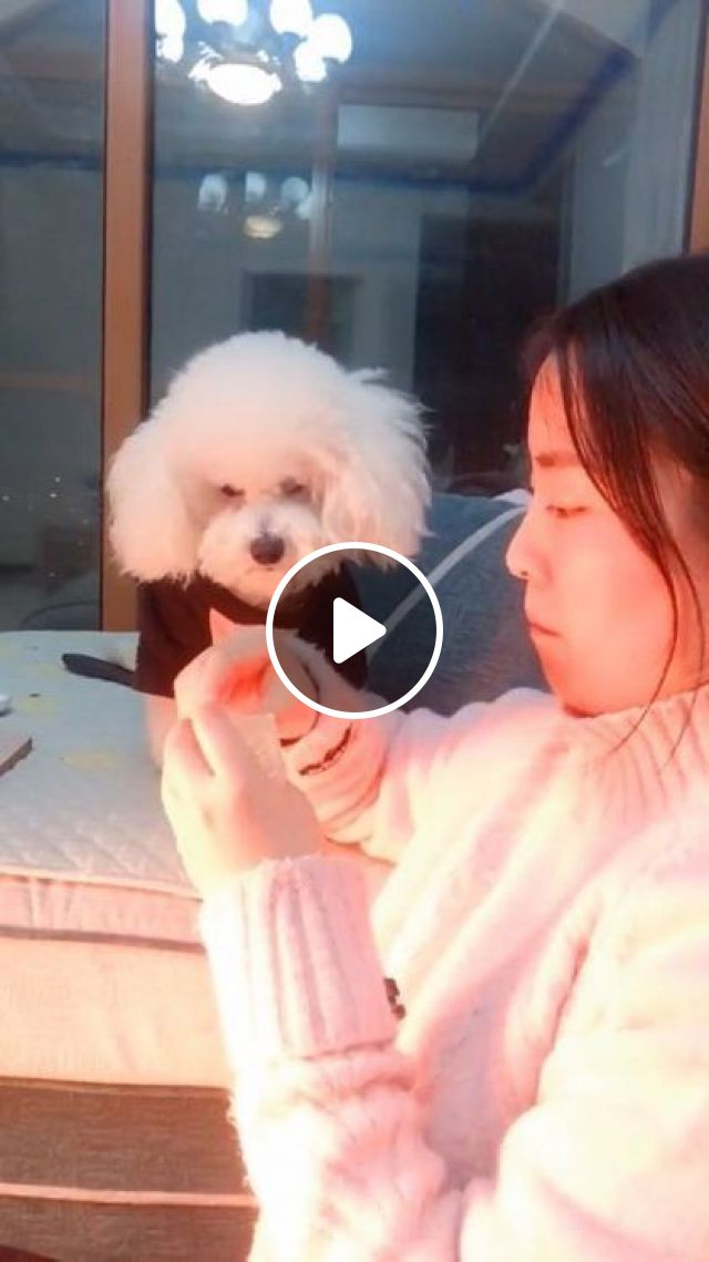 I'm Angry, I Don't Want To Eat - Video & GIFs   animals & pets, cute girls, clothes clothes, living room, luxurious furniture