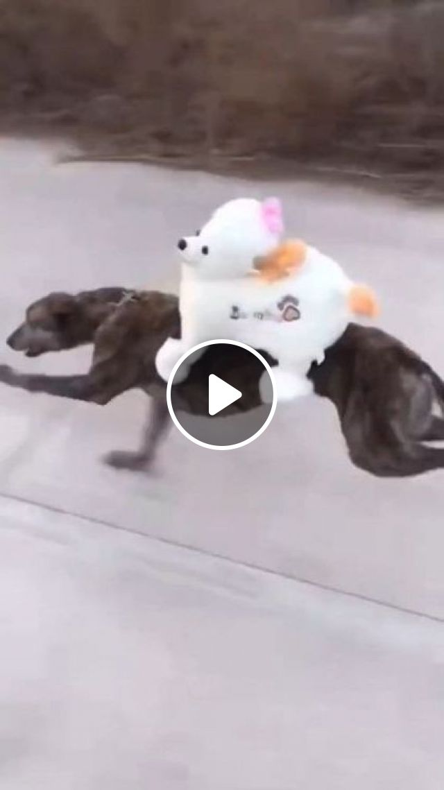 Two Dogs And A Trip Away - Video & GIFs | animals & pets, dogs, dog breeds, trips away