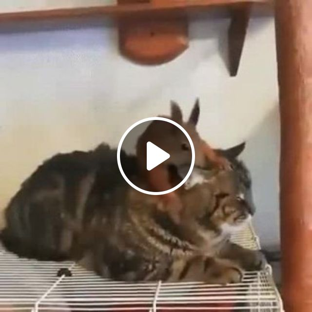 Squirrel Likes To Play With Cat - Video & GIFs | animals & pets, take care of pets, cute cats, funny animals