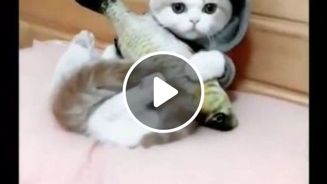 Cat's Bedroom Is Very Beautiful - Video & GIFs | bedroom interior, soft mattress, wooden bed, cute kittens
