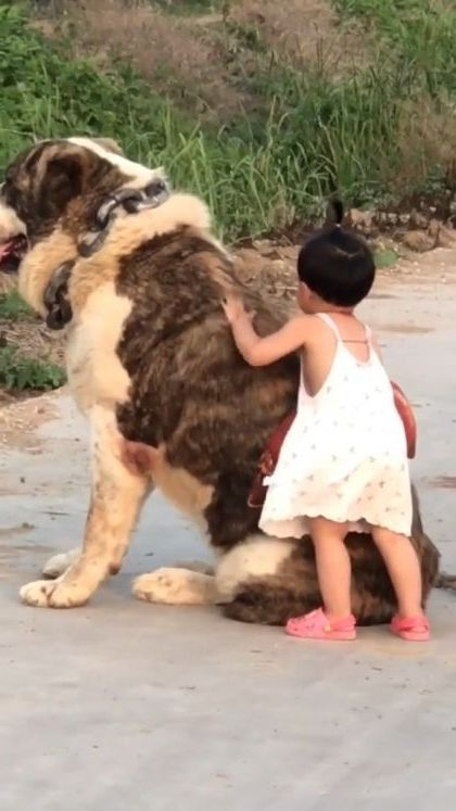 Giant dog friend with baby - Video & GIFs | animals & pets,giant dogs,friendly animals,pet care,cute babies,baby clothes