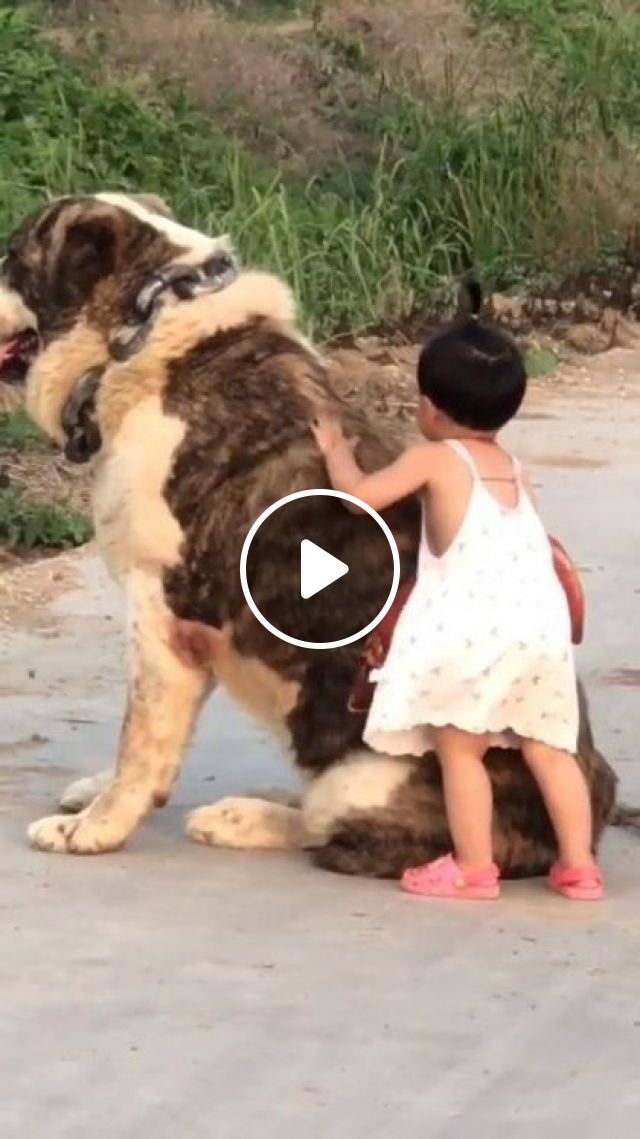 Giant Dog Friend With Baby - Video & GIFs | animals & pets, giant dogs, friendly animals, pet care, cute babies, baby clothes