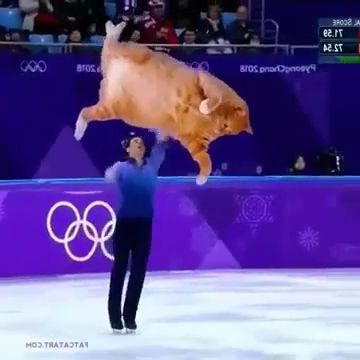 Cat can also skate
