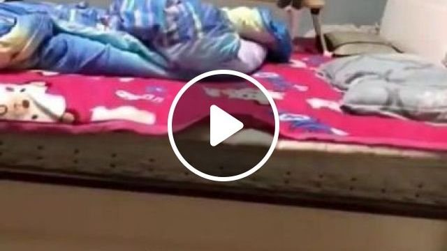 Cats Like To Play - Video & GIFs | animals & pets, cute kittens, bedroom furniture, soft beds