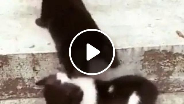 Lemme Give You A Boost For You - Video & GIFs   animals & pets, smart puppies, cute dogs