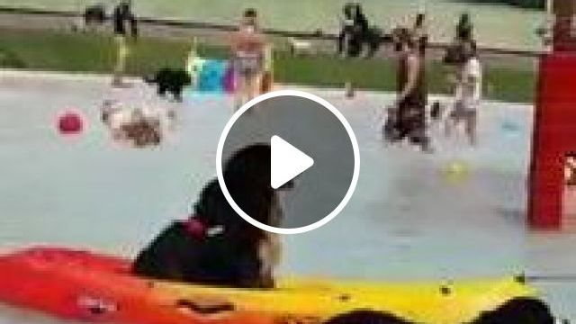 Spain Travel,water Park For Dogs That Looks Like Paradise - Video & GIFs | nature & travel, spain travel, water park, plastic boats