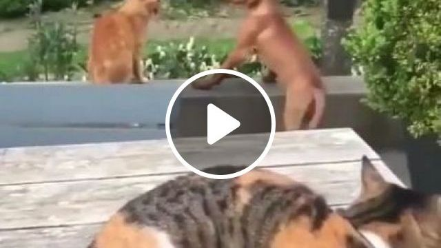 Brother, Stop, Dogs Are Good Friends - Video & GIFs | animals & pets, golden retriever dogs, friendly animals, funny cats