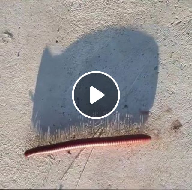 Oh.. Millipede Stampede Vs Rammstein Links - Video & GIFs   animals & pets, funny animals, cute animals
