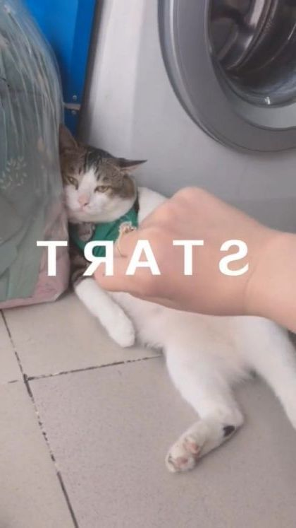 What is cat thinking - Video & GIFs | animals & pets,cute cats,cat breeds,washing machines