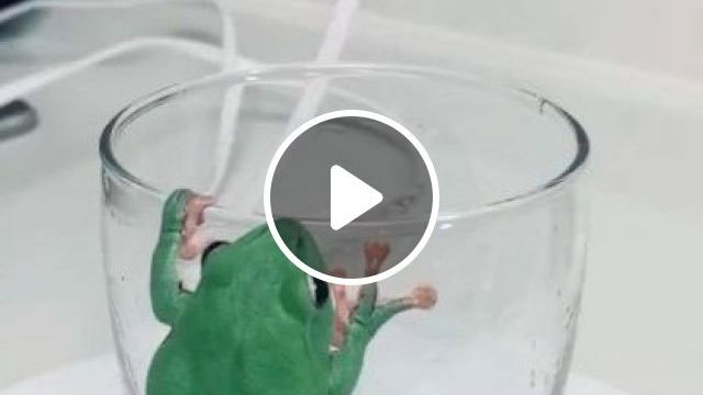 Green Frog Clings To A Glass - Video & GIFs | animals & pets, green frogs, glass cups