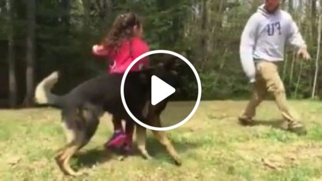 Training Smart Dog To Protect Children - Video & GIFs | animals & pets, smart dogs, dog breeds, children shoes, children clothes