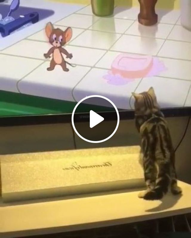 Cat Likes Watching TV - Video & GIFs | animals & pets, cute cats, cat breeds, smart televisions, living room furniture