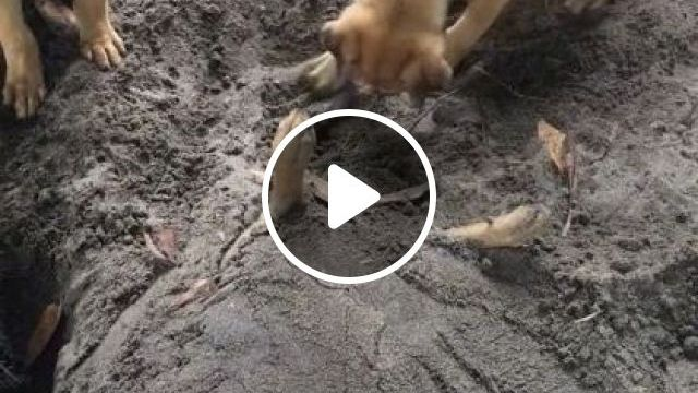 Dog Wakes Up After A Long Sleep - Video & GIFs   animals & pets, cute dogs, dog breeds, funny dogs