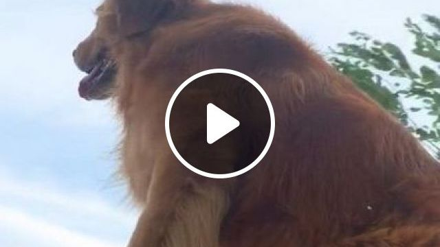 Talented Dog On Motorbike - Video & GIFs | animals & pets, talented dogs, dog breeds, sports motorcycles