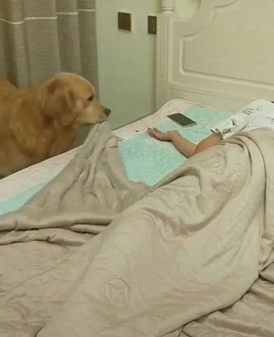 This is so heartwarming - Video & GIFs | animals & pets,smart dogs,dog breeds,smart phones