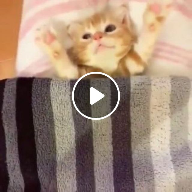 Kitten Getting Tucked In For Bed - Video & GIFs | animals & pets, yellow cats, cute kittens