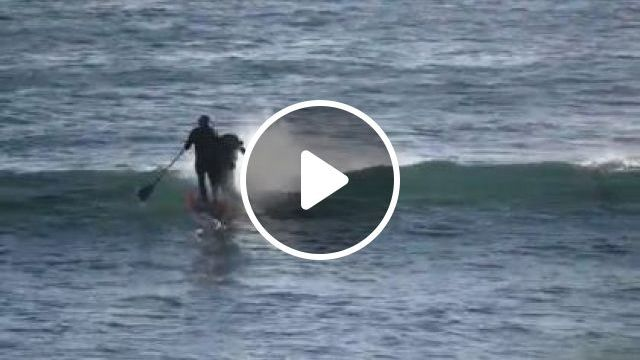 A Man Surfing With Dolphins - Video & GIFs | animals & pets, men, sports clothes, friendly dolphins