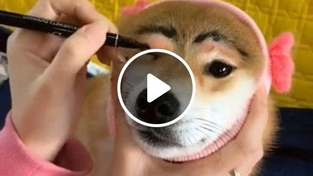 Girl Is Makeup For Dog - Video & GIFs   animals & pets, cute girls, makeup tools, dog breeds