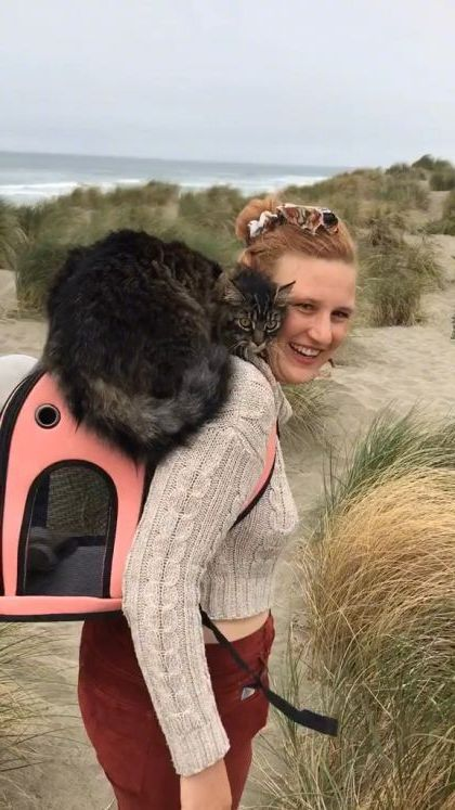 Friends carry you when you're tired - Video & GIFs | animals & pets,cute cats,travel animals,sea travel