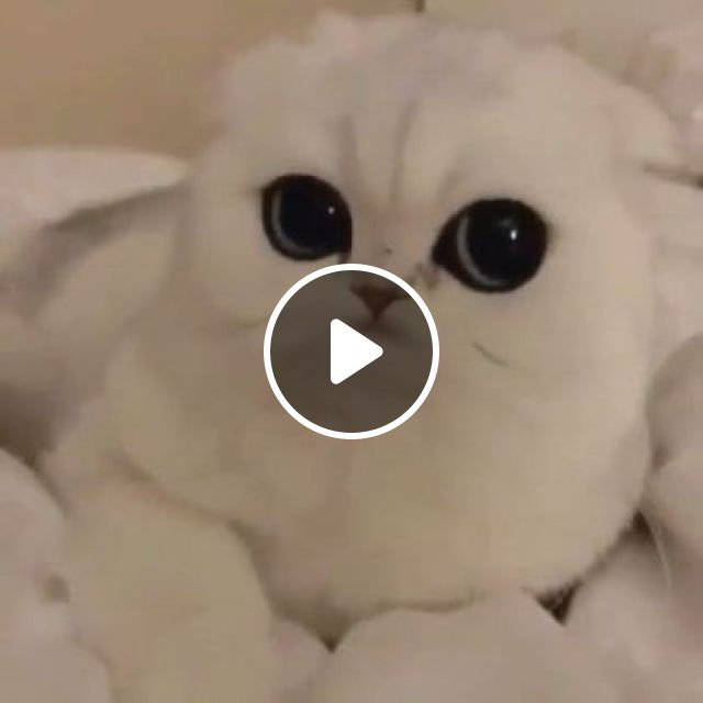 Kitten With Soft Fur And Beautiful Eyes - Video & GIFs | animals & pets, cute kittens, take care of pets
