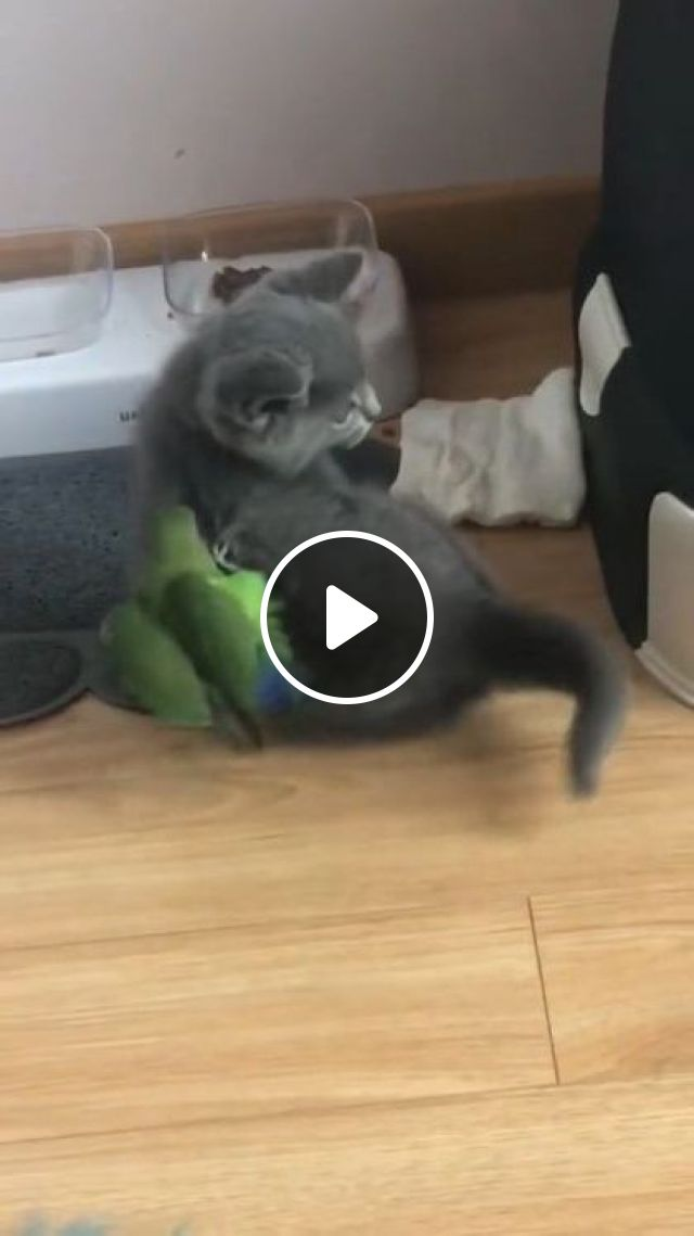 Green Parrot Wants To Be Friends With Cat - Video & GIFs   animals & pets, green parrots, friendly animals, cute cats