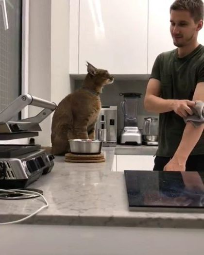 cat is very grateful to its owner - Funny Videos - funnylax.com - animals & pets,cute cat,friendly man,kitchen furniture,kitchen equipment