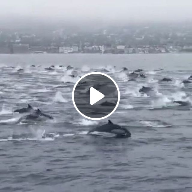 Migration Of Dolphins At Sea - Video & GIFs | animals & pets, cute dolphins, sea travel