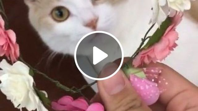 Flowers Are Also Beautiful But I Like To Play More - Video & GIFs   animals & pets, cute cats, beautiful flowers, cats care