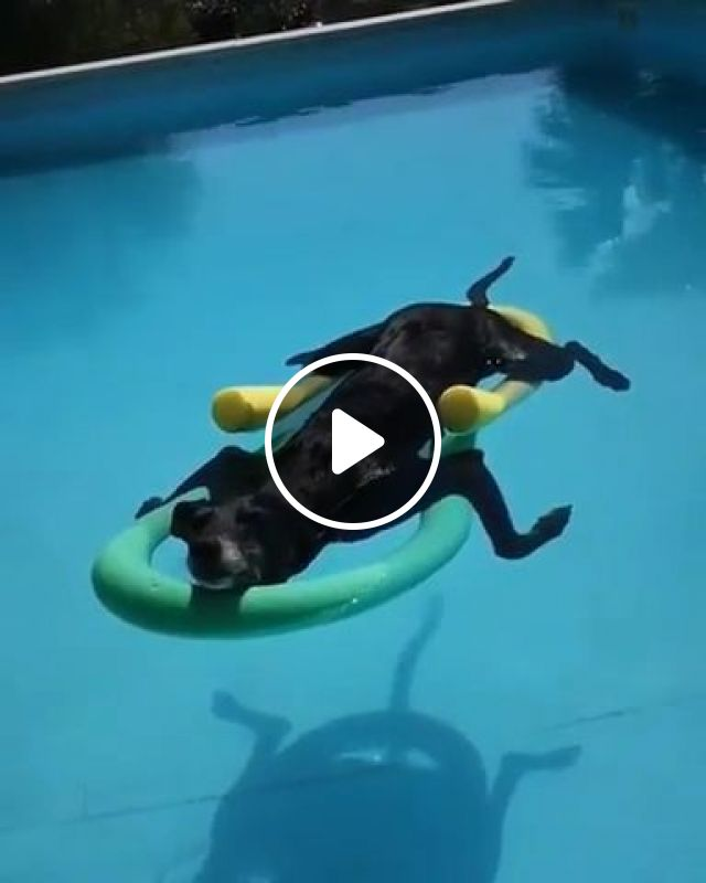 Soaking Up That Summer Sun In Pool - Video & GIFs   animals & pets, cute dogs, swimming pools, summer cooling