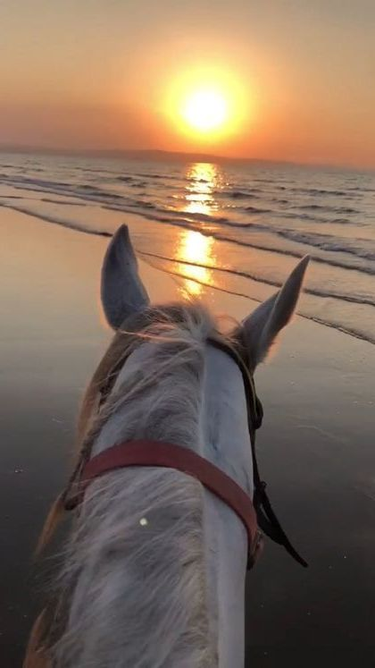 Sunset on the beach and  horse - Funny Videos - funnylax.com - animals & pets,sea travel,friendly animals,smart horses