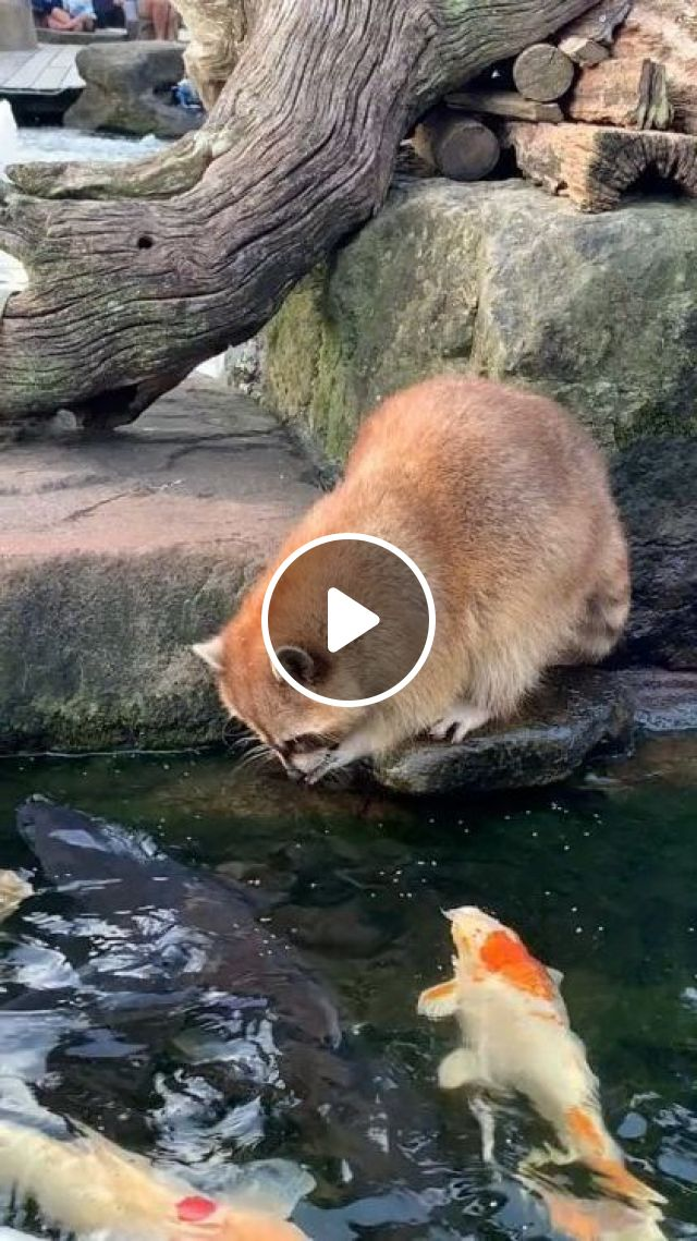 Very Delicious Water - Video & GIFs | animals & pets, friendly animals, ornamental fish
