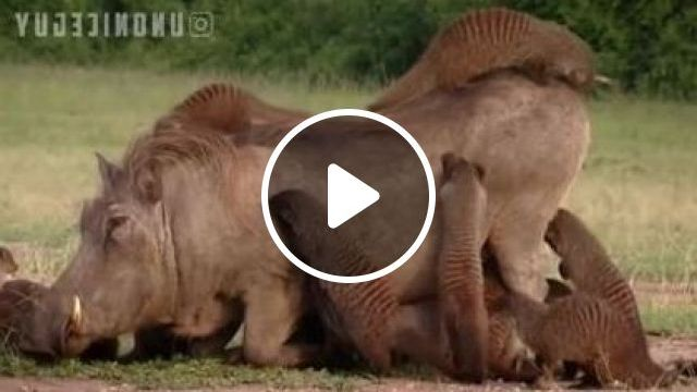 Africa, Animals Are Good Friends - Video & GIFs | animals & pets, funny animals, cute animals