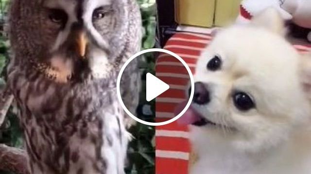 Mom, How Can I Not Be Like That - Video & GIFs | animals & pets, smart dogs, cute dogs, dog breeds, friendly animals