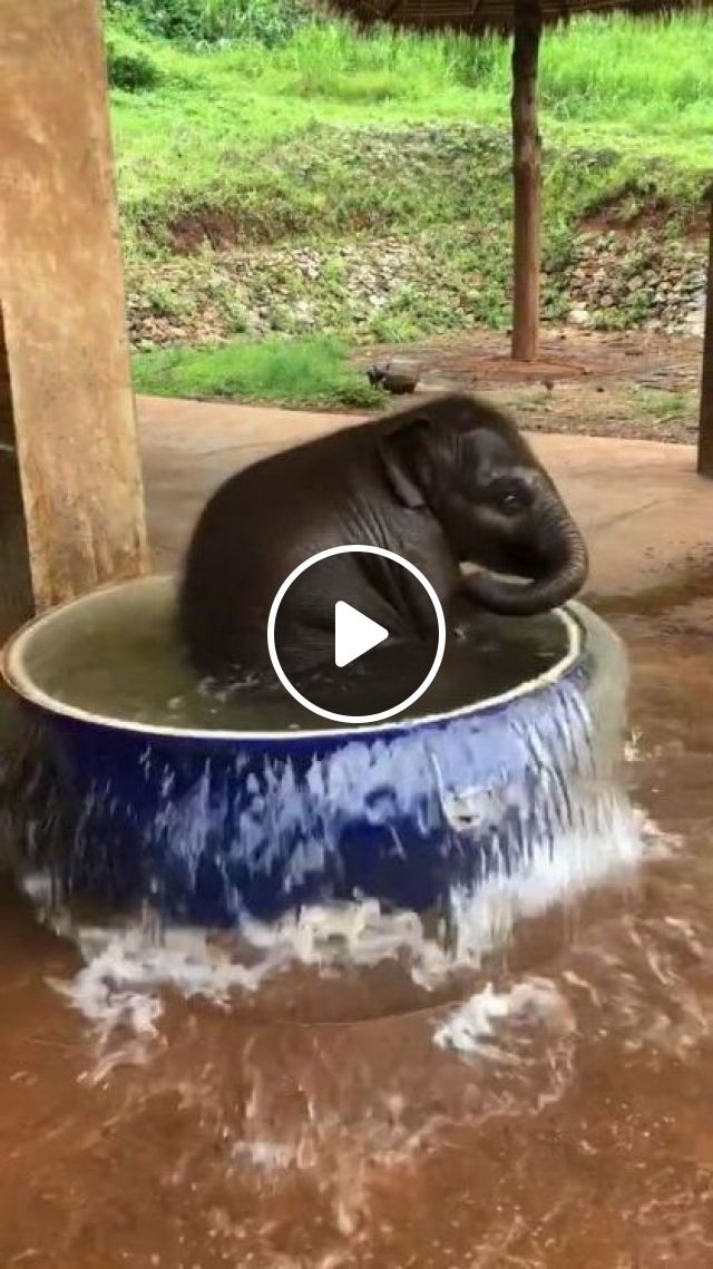 Baby Elephant Likes To Play With Water - Video & GIFs | animals & pets, baby elephants, animal care