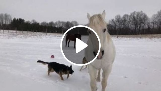 Dogs And Horses Are Friends - Video & GIFs   animals & pets, cute dogs, friendly animals, smart horses