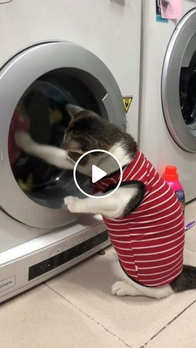 Cat Likes To Wear Clean Clothes - Video & GIFs | animals & pets, cute cats, pet clothes, washing machines