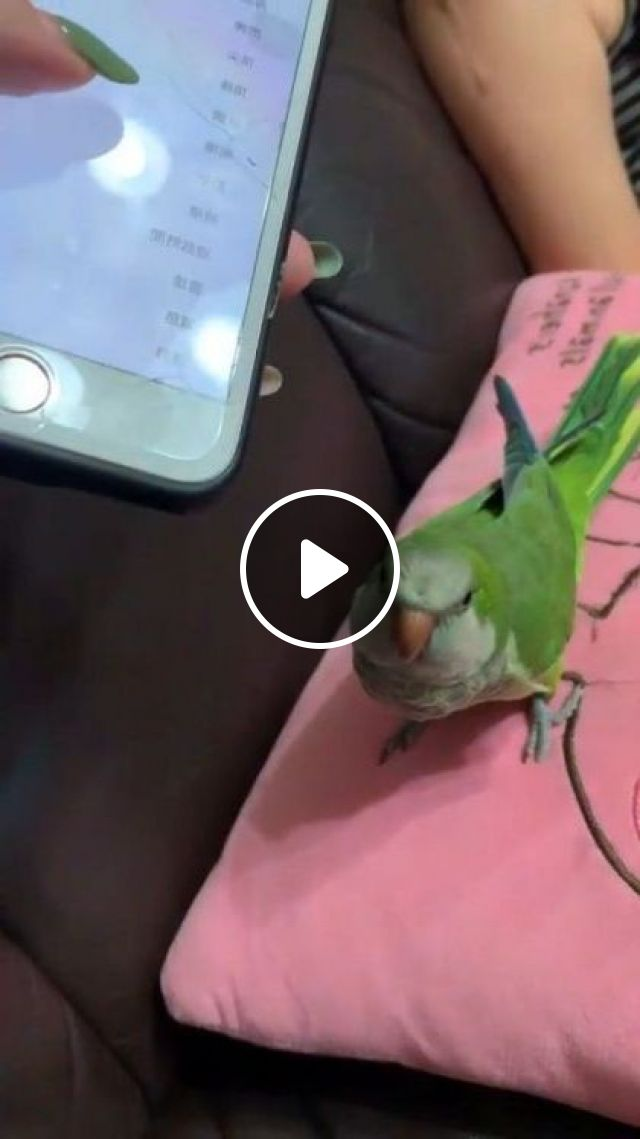 Green Parrot And Smartphone - Video & GIFs | animals & pets, green parrots, smartphones, living room furniture