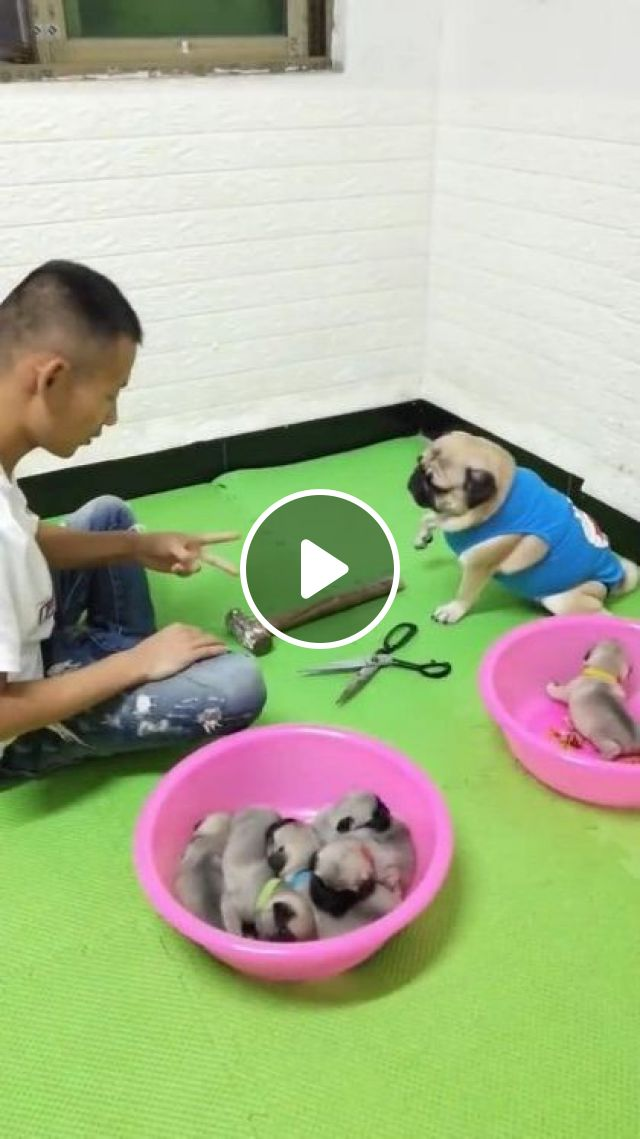 Woooow Smart Dog - Video & GIFs | animals & pets, cute dogs, caring animals, luxury apartments