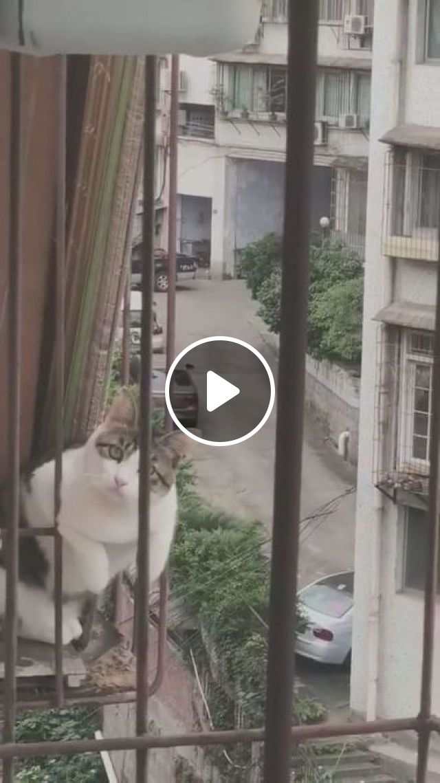 I saw it from a neighbor's house, animals & pets, cute cats, apartments
