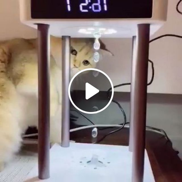 Why Is Water Flowing Backwards, Cat Said - Video & GIFs | animals & pets, cute cats, caring animals