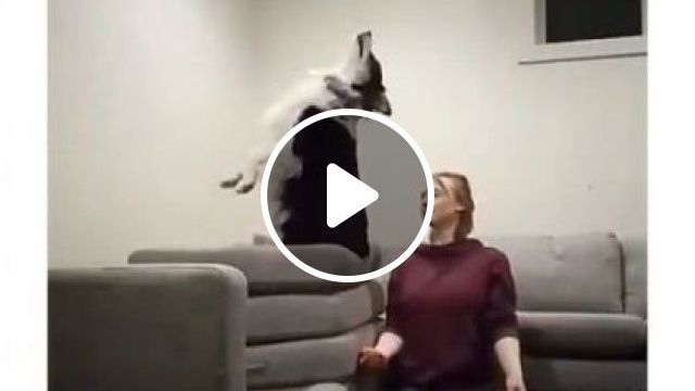 Trust Between Two Is Unbreakable - Video & GIFs | animals & pets, cute dogs, dog breeds, caring animals, apartment furniture
