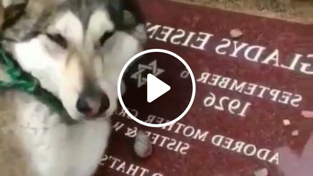 I'm Crying When I See It - Video & GIFs   animals & pets, cute dogs, dog breeds