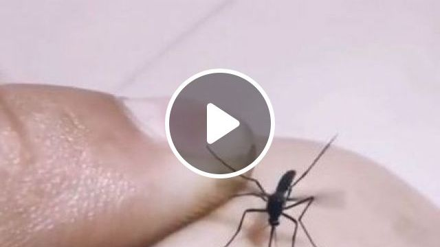 How To Catch A Mosquito - Video & GIFs | animals & pets, cute animals