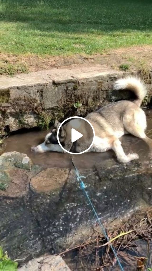 This Doggo Learnt A New Trick Today - Video & GIFs   animals & pets, cute dogs, caring animals