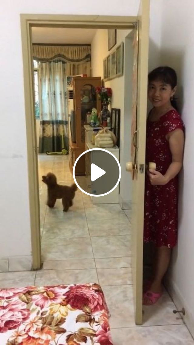 I Will Find You, Dog Said - Video & GIFs | animals & pets, cute dogs, dog breeds