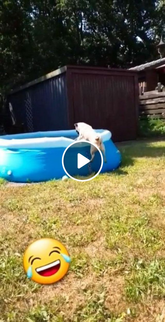 Puppy And Hot Summer - Video & GIFs   animals & pets, funny animals, caring animals, plastic swimming pool
